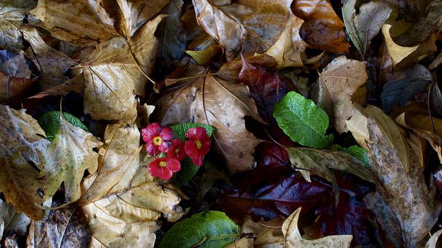 foglie d'autunno di gianfranco_liccardo