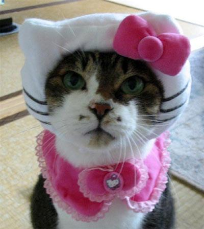 http://www.catsinclothes.com/hello-kitty-cat-clothing-01.jpg
