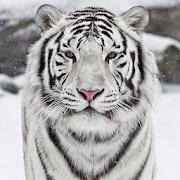 النمر الأبيض خلفية متحركة