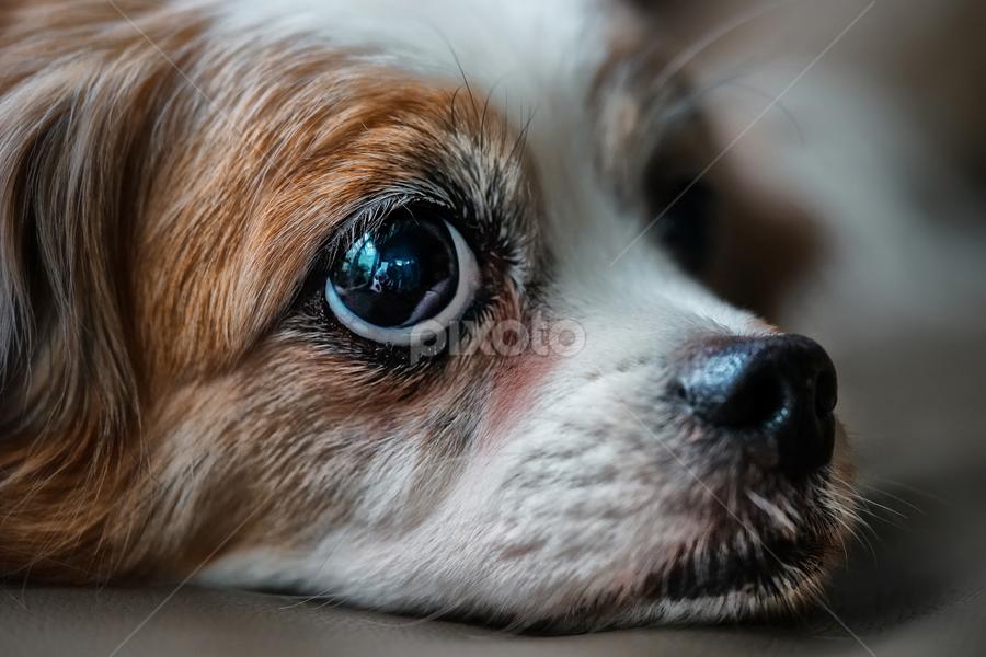 My Mac  by Tran Ngoc Phuc Ngoctiendesign - Animals - Dogs Portraits (  )
