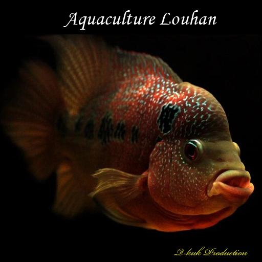 Aquaculture Louhan