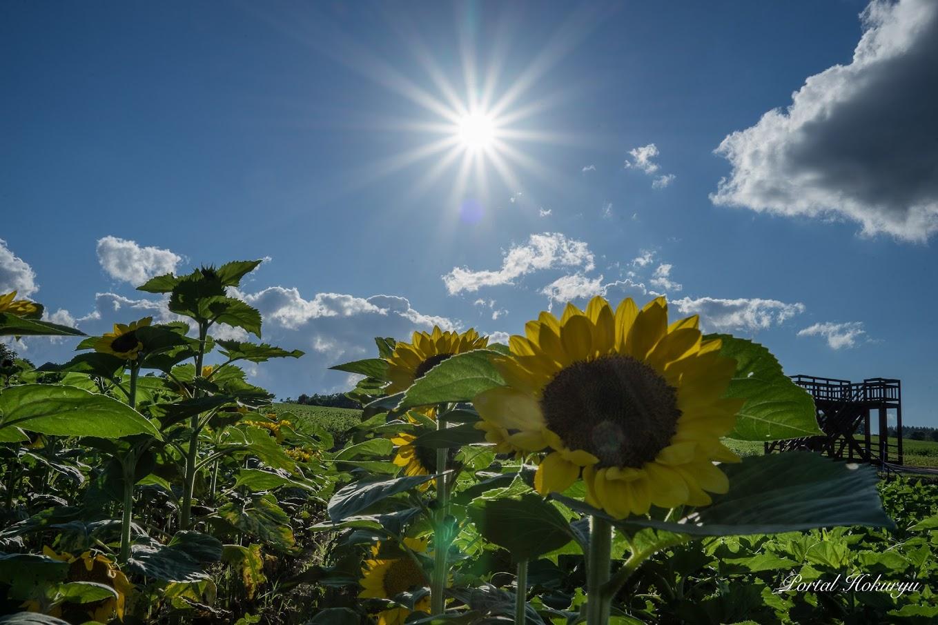 燦々と降り注ぐ陽を浴びて