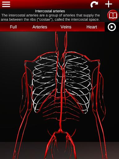 Circulatory System in 3D (Anatomy) 1.58 screenshots 19