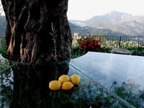 Foto: Spanien (Spain), Mallorca, Sollèr, Cas Xorc, 2003 © Eckhard Supp
