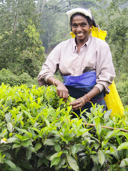 Earning about 500 rupees a day for 20 kilos of tea leaves