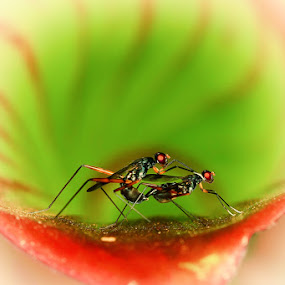 Romantisme by Faiq Alfaizi - Animals Insects & Spiders