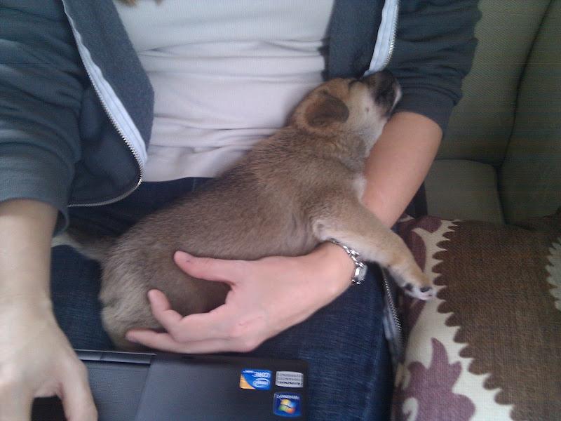 Photo: Baron sleeping in the crook of Susan's arm