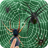 The Arachnids