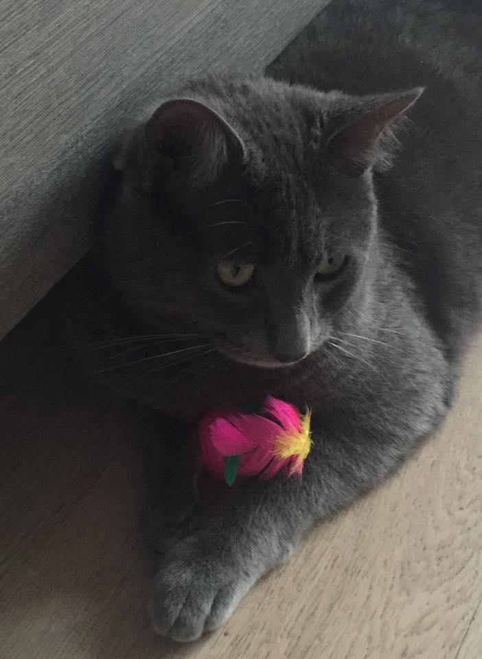 fiorellino di laurafoglino