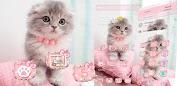 Pink Cute Kitty Cat Theme Apps (APK) gratis downloade til Android/PC/Windows screenshot