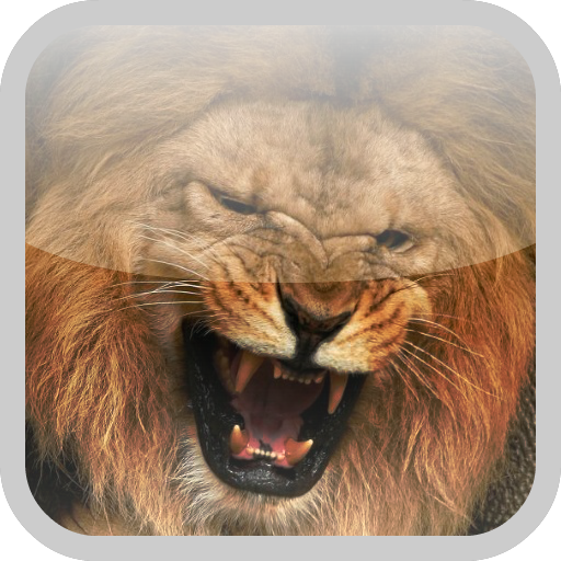 Lion HD Lock Screen Android APK Download Free By Ultimate Lock Screens