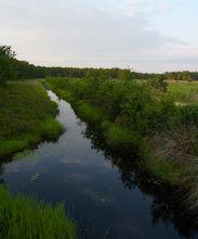 Photo: Drainage ditch at Franklin Parker Preserve
