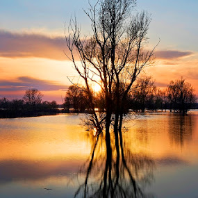 by Siniša Almaši - Nature Up Close Water ( up close, reflection, tree, nature, sunset, view, viewlight, depth, colours )