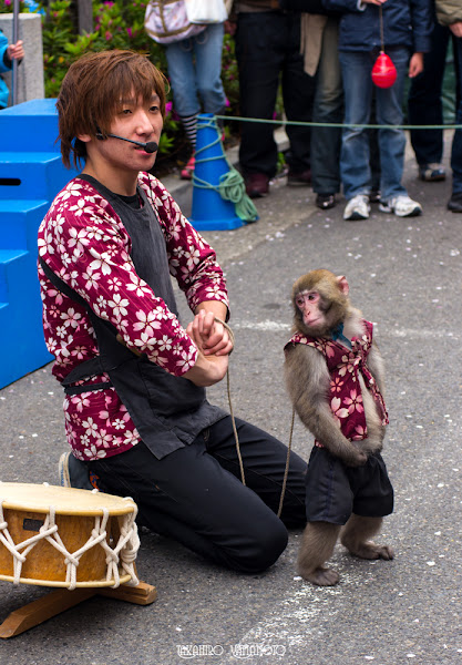 Photo: The monkey was on the stage.
