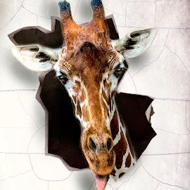 Ouch! by William Underwood  - Digital Art Animals