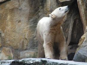 Photo: Knut begibt sich auf Anlagenrundgang ;-)