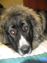 Photo: Odin is an expert in canine massages and is thrilled when he walks into the massage room for his session.