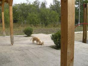 Photo: Kutya-macska barátságos játékban egymással.