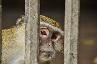 Photo: behind bars