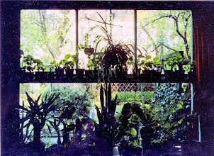 Photo: Blick in den Garten durch mein Erkerfenster