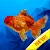 Fish coloring - Sea creatures poly art color file APK for Gaming PC/PS3/PS4 Smart TV