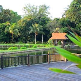 Orto, Nature Sanctuary.  by Abdul Salim - City,  Street & Park  City Parks (  )