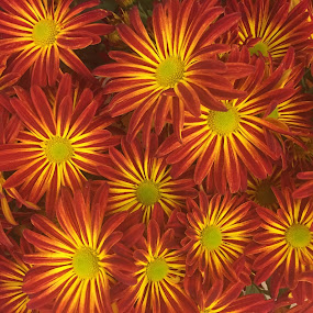 Fall Flowers by Diane Garcia - Flowers Flower Arangements (  )