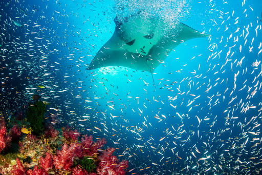 Gabon passes measures to protect its sharks and rays on World Ocean Day