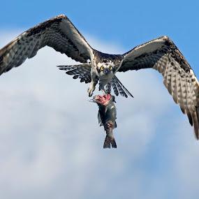 Lunch by John Kellaway - Animals Birds