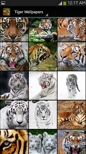 Tiger Wallpaper  screenshots 2