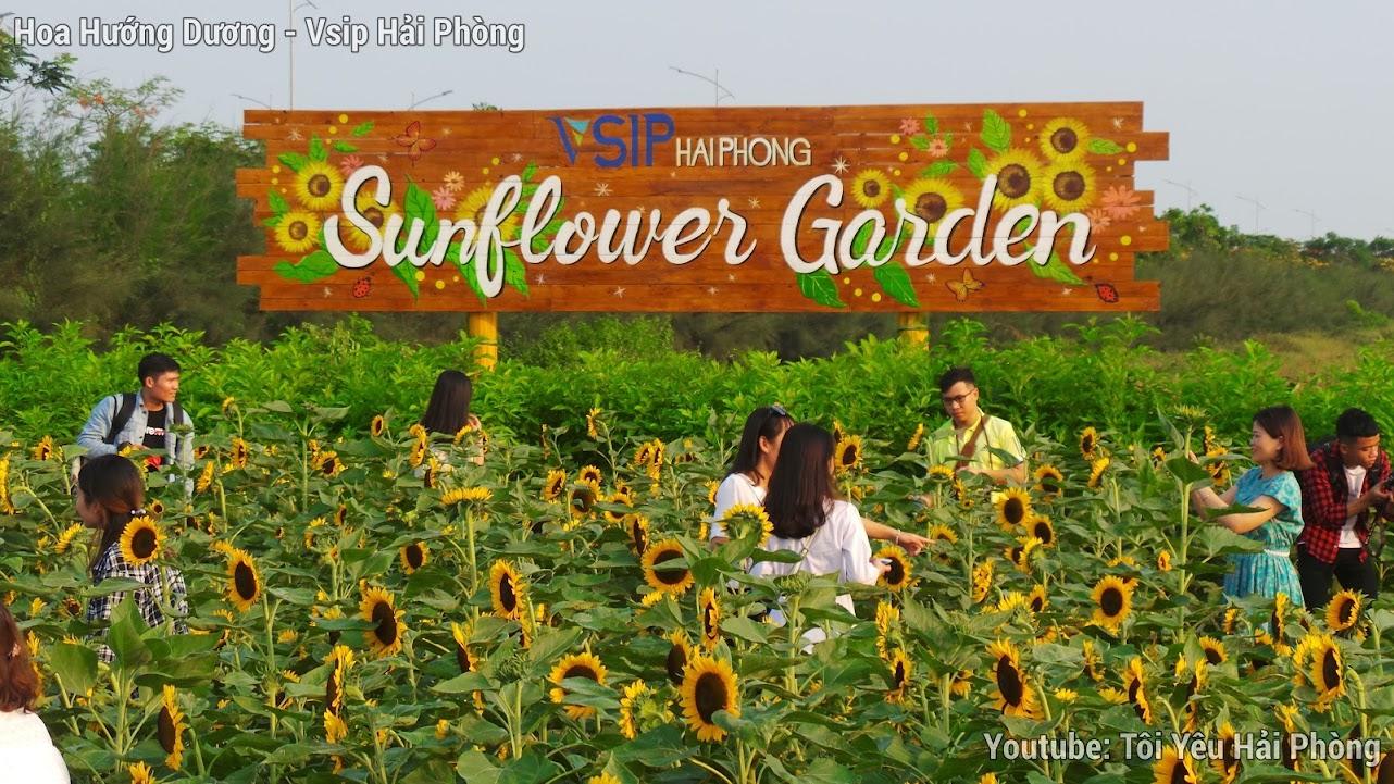 Vườn hoa Hướng Dương - Central Park Vsip Hải Phòng 8