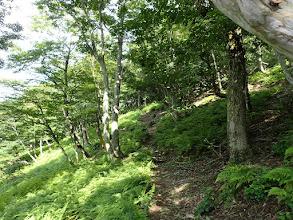 シダの茂る斜面をトラバース
