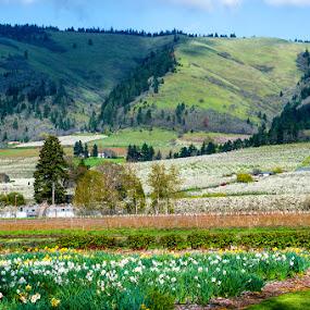 Hillside Farm by Dennis Mai - Landscapes Prairies, Meadows & Fields ( farm, oregon, hills, gorge, green, crops )