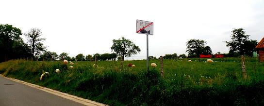 Photo: 2 vrije schapen ;;het gras is altijd groener aan de andere kant;;