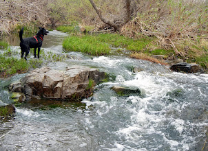 Photo: Chloe playing in a stream at Mission Trails Regional Park