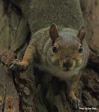 Photo: (Year 3) Day 23 - Squirrel in Golden Gate Park