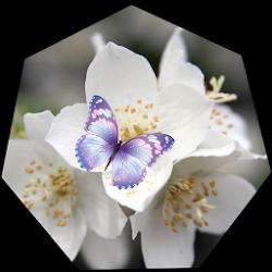 White Flowers Wallpaper Live
