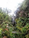 Indonesia. Papua Baliem Valley Trekking. Slippery ladder trail to Beligama