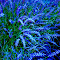 deco-grass(2)-1.jpg