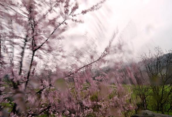 é primavera ? di Do