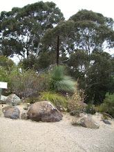Photo: Xanthorrhoea australis (Blackboy)
