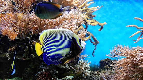 Fish Aquarium Wallpaper - náhled