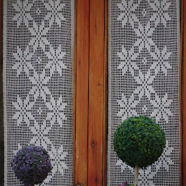 Catalonia Window by Karina Zawilinski - Artistic Objects Still Life ( green, leaves, symmetry, lace, plant, purple, wood, window, curtain )