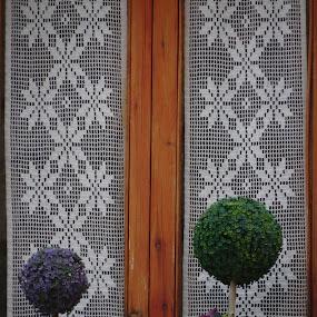 Catalonia Window by Karina Zawilinski - Artistic Objects Still Life ( green, leaves, symmetry, lace, plant, purple, wood, window, curtain )