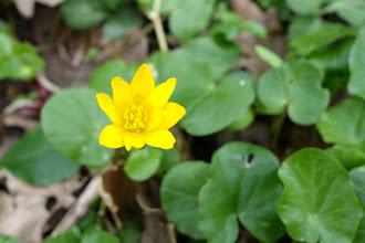 Photo: A jak bychom na prvním jarním výletě čekali, můžeme se cestou těšit pestrou jarní květenou..