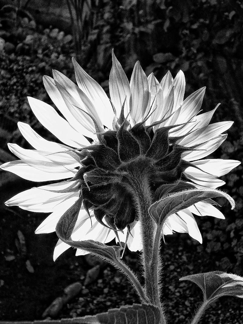 Petali di Fiorenza Aldo Photo