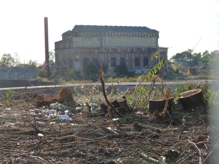 Vorn Baumstümpfe und Geäst, hinten historisches Gebäude.