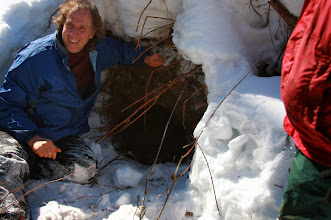 Photo: Tim Ginnett, UWSP professor of wildlife, sits next to a black bear den at Treehaven UWSP (www.uwsp.edu/treehaven)