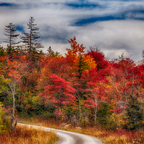 Fall Drive by Ernie Page - Landscapes Forests ( autumn, fall, road, landscape, fall color,  )