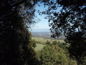 Photo: A view through the trees.